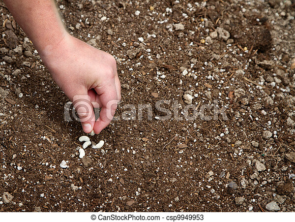 Close-up of child planting seed  - csp9949953