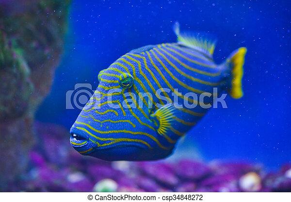 Close up of fish - csp34848272