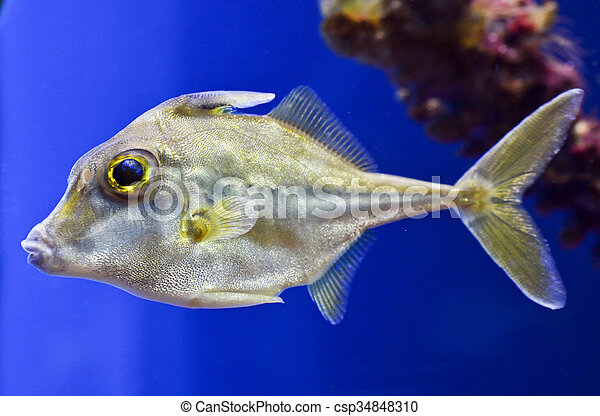 Close up of fish - csp34848310