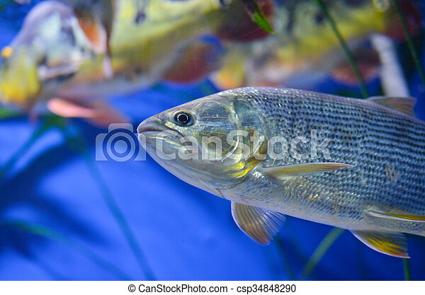 Close up of fish - csp34848290