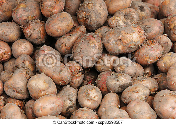 Close up of fresh potatoes - csp30293587