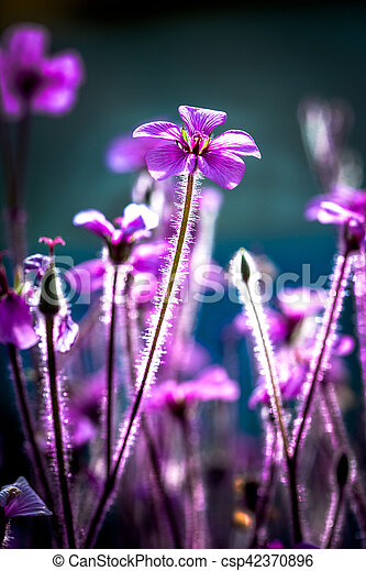 Close up of fuzzy purple flowers close up of fuzzy purple flowers csp42370896 mightylinksfo