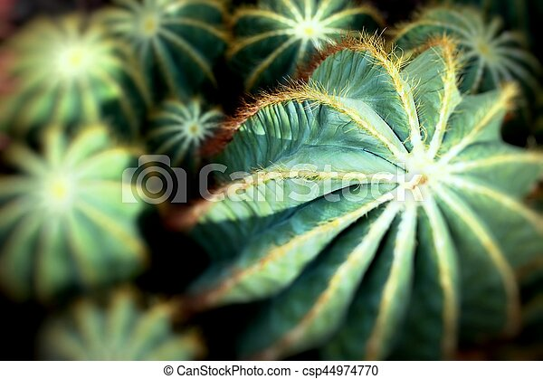 Close up of globe shaped cactus with long thorns - csp44974770