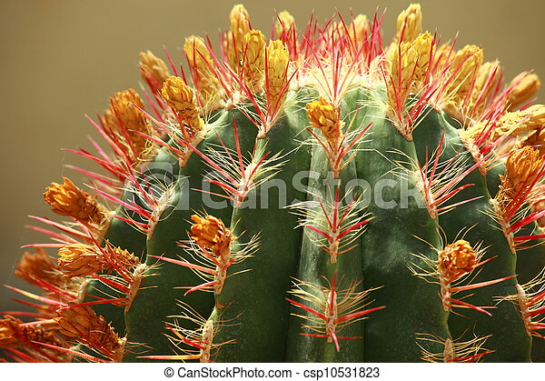 close up of globe shaped cactus with long thorns - csp10531823