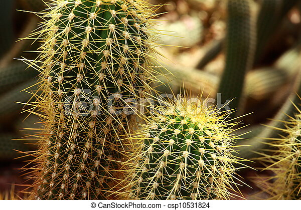 close up of globe shaped cactus with long thorns - csp10531824