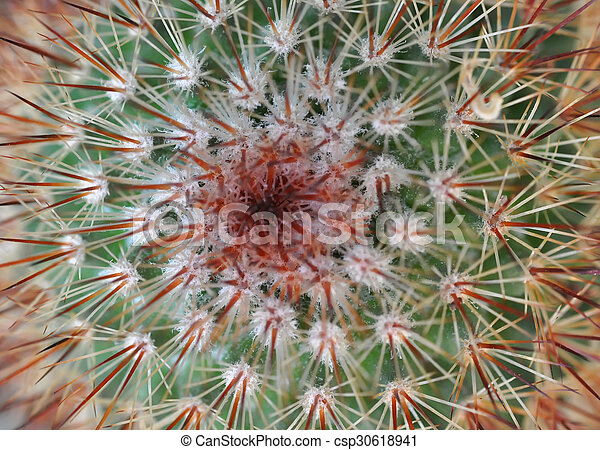 Close up of globe shaped cactus with long thorns - csp30618941