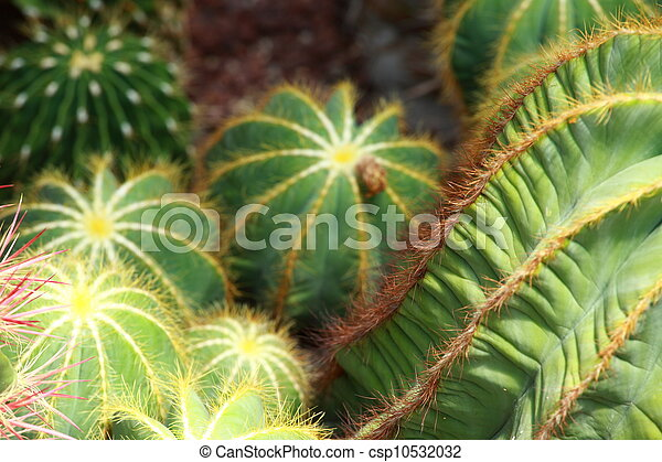 close up of globe shaped cactus with long thorns - csp10532032