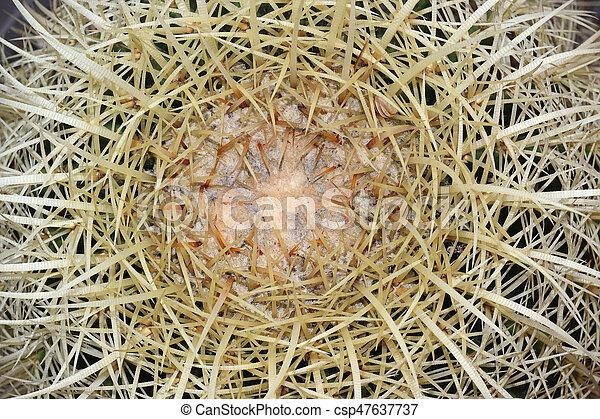 close up of golden barrel cactus plant - csp47637737