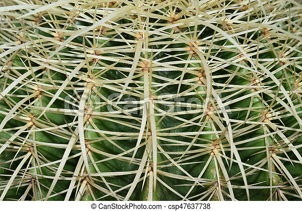 close up of golden barrel cactus plant - csp47637738