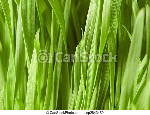 Close up of green grass - shallow depth of field - csp2843450