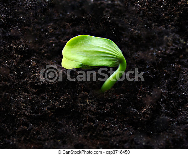 Close up of green sprout - csp3718450