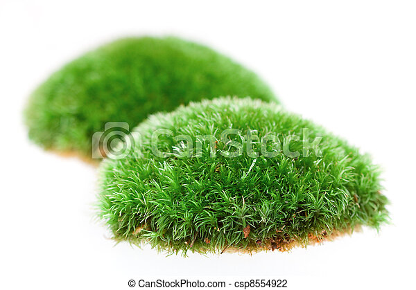Close up of moss on white background  - csp8554922