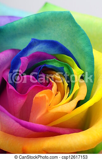 Close up of rainbow rose heart - csp12617153