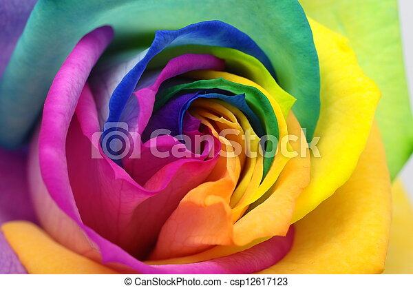 Close up of rainbow rose heart - csp12617123
