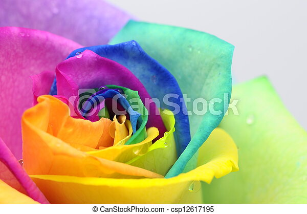 Close up of rainbow rose heart - csp12617195
