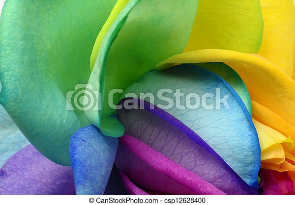 Close up of rainbow rose heart - csp12628400
