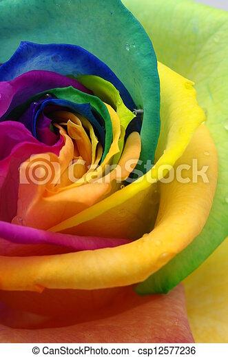 Close up of rainbow rose heart - csp12577236