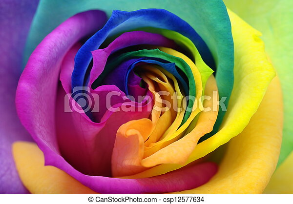 Close up of rainbow rose heart - csp12577634