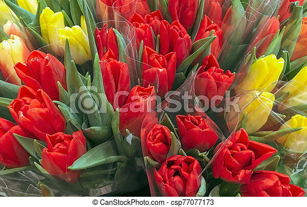 Close-Up Of Red Tulips Background - csp77077173