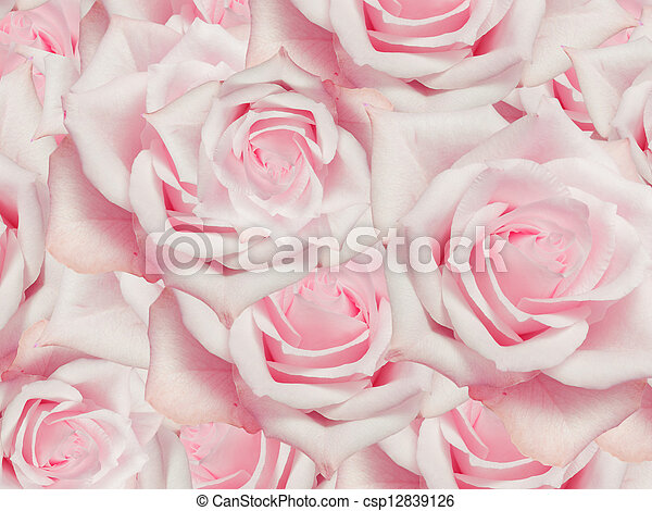 Close up of roses flowers background - csp12839126