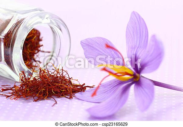 Close up of saffron flower and dried saffron spice  - csp23165629