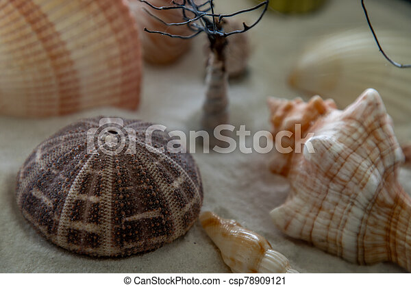 Close-up of seashell on sand background. - csp78909121
