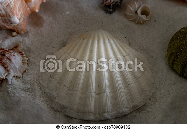 Close-up of seashell on sand background. - csp78909132