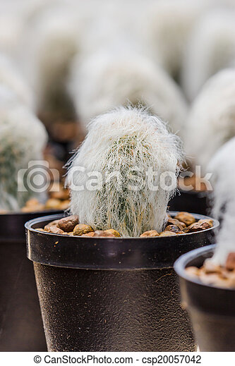 Close up of shaped cactus with long thorns - csp20057042