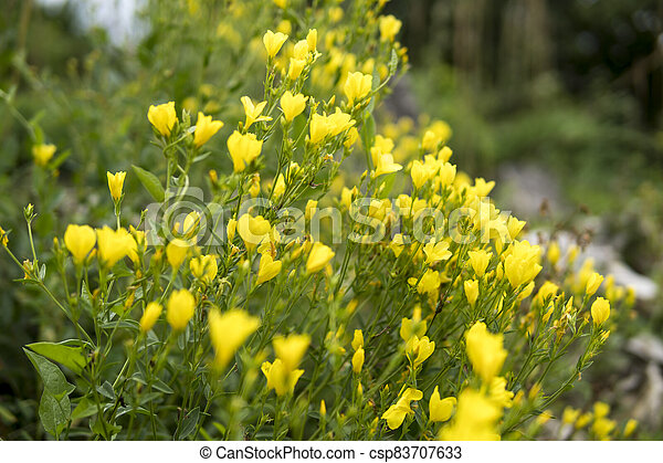 close up of small yellow flowers - csp83707633