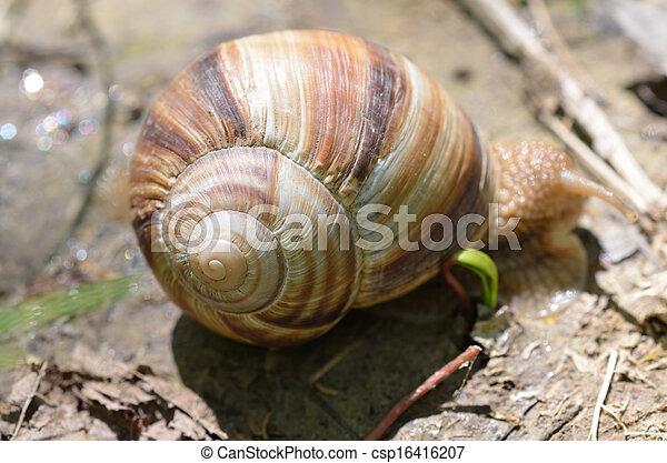 Close up of snail - csp16416207