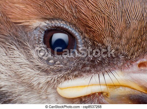 close up of sparrow face - csp8537268