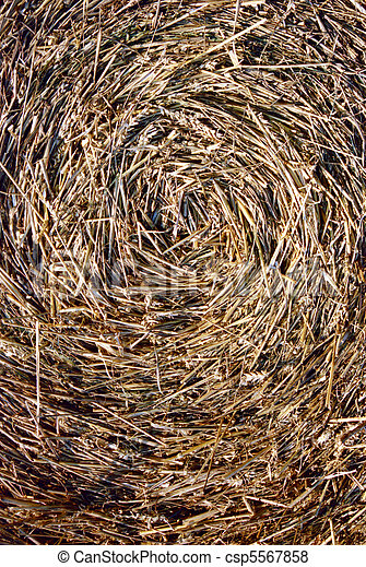 Close-up of straw bale - csp5567858