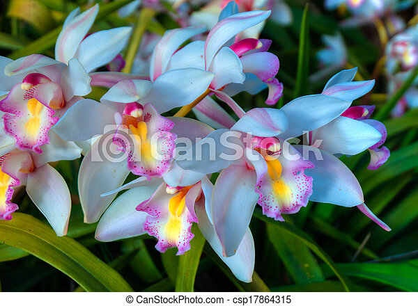 Close up of the wild Orchid Flower - csp17864315