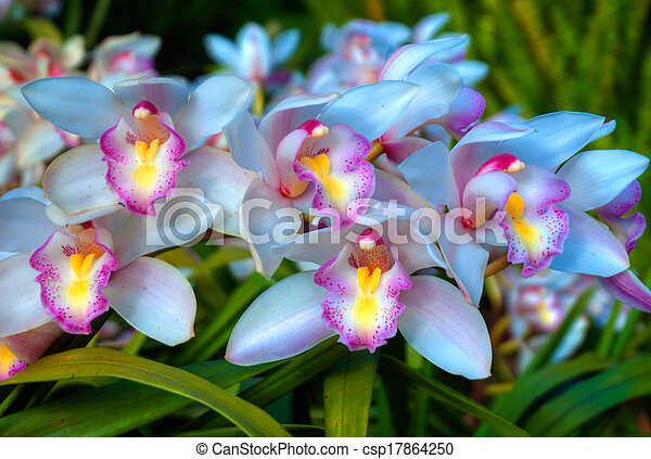 Close up of the wild Orchid Flower - csp17864250