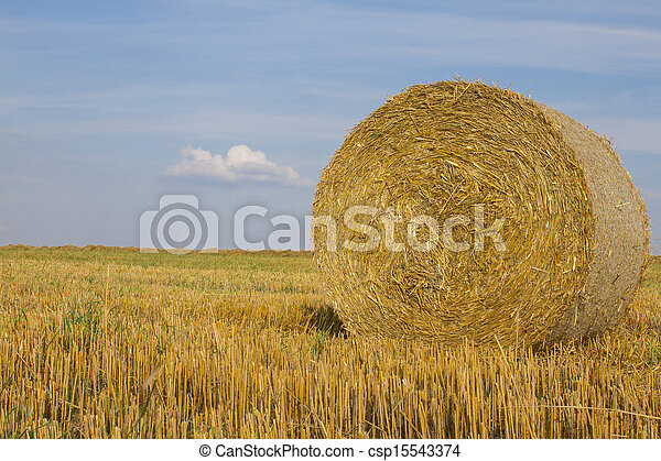 Close-up of wheat straw bale - csp15543374