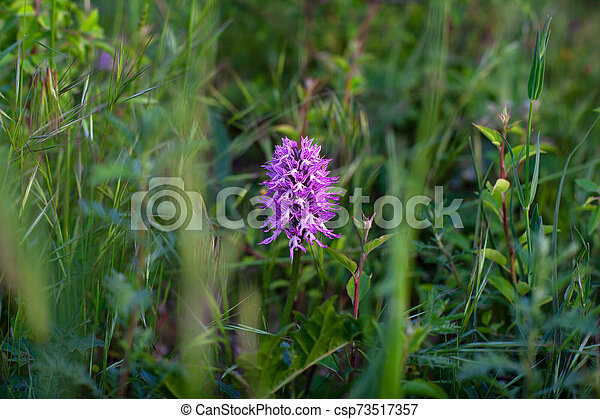 Close up of wild orchid - csp73517357