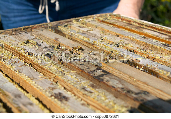 Close up of worker bees in wooden bee-keeping box - csp50872621