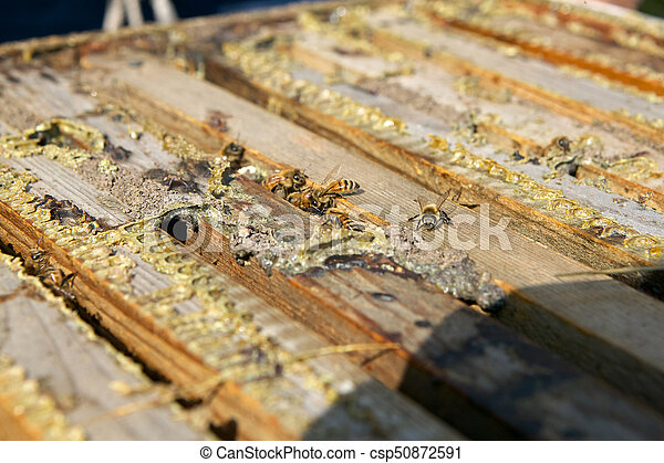 Close up of worker bees in wooden bee farming box - csp50872591