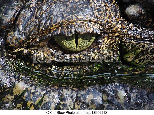 close up on a crocodile's eye - csp13806813