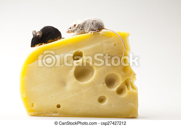 Close up on little mouse and cheese - csp27427212