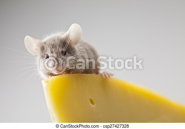 Close up on little mouse - csp27427328