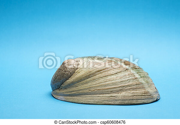 Close up photo of abalone shell on blue background - csp60608476