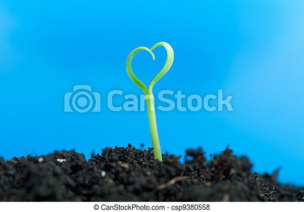 close-up, seedling, solo, jovem, crescendo, saída - csp9380558