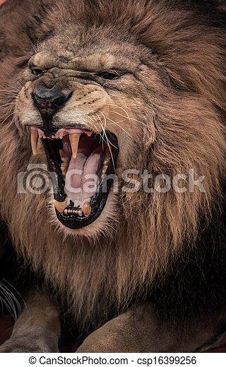 close up shot of roaring lion