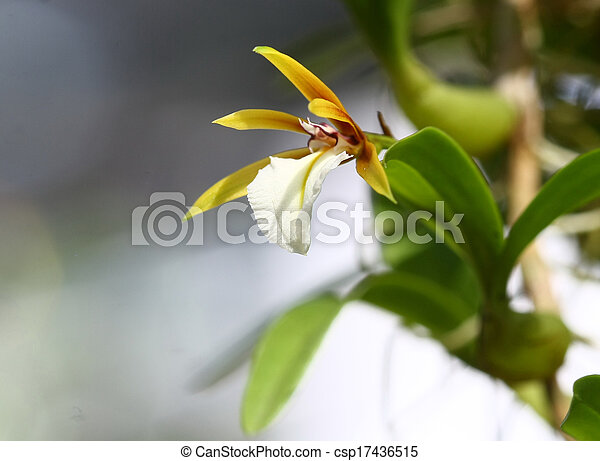 close up small orchid in wild - csp17436515