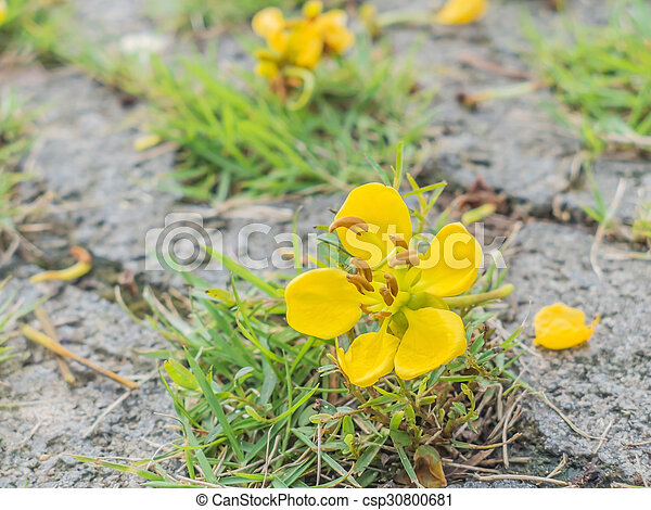 Close up small yellow flower on green grass background close up small yellow flower csp30800681 mightylinksfo