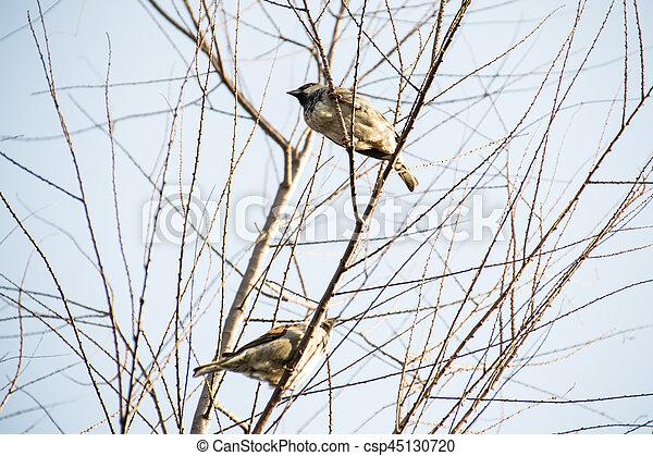 Close-up sparrow. - csp45130720