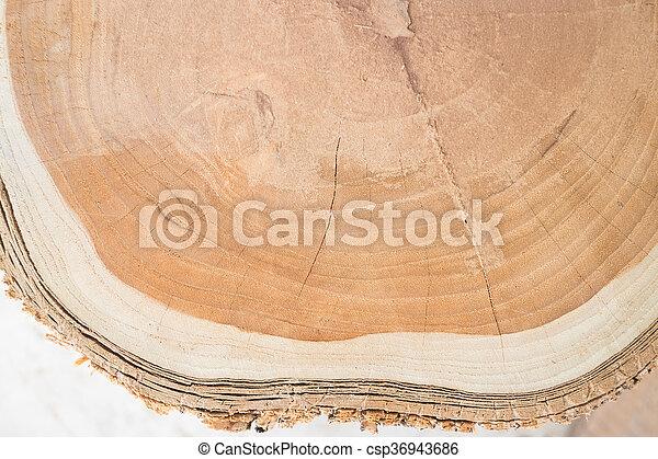 Close-up surface of wooden cut texture - csp36943686