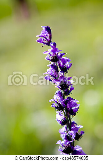 close up the beautiful purple flower on blurred background - csp48574035