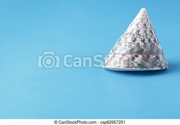 Close up view of big sea shell on plain blue background - csp62957251